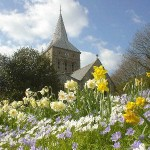 All Saints with Daffodils
