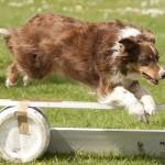 Dog jumping 2010
