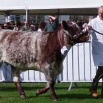 In the show ring