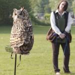 Owl at Country Fair 2011